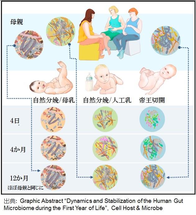 赤ちゃんと菌